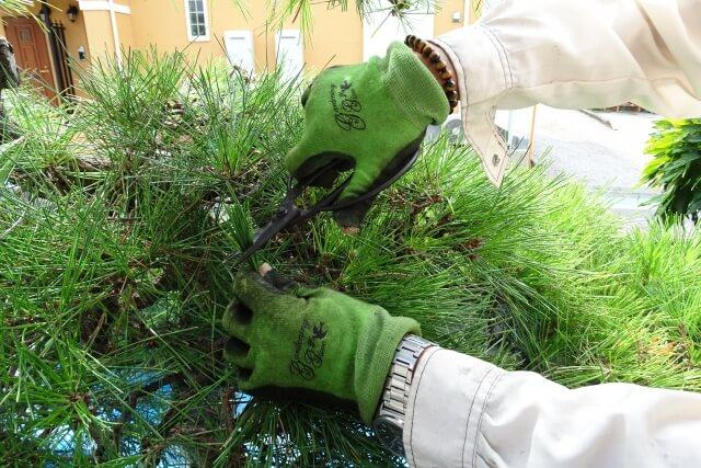 吹田市で造園を依頼するなら【NOMURA-WORKS】~造園業者と協力して理想の庭を実現します!~ 造園・植栽の画像