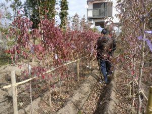 どんな樹木をお宅に植えようか?