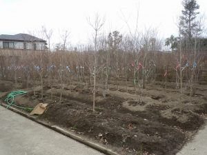 自分で樹木選びが出来ます!